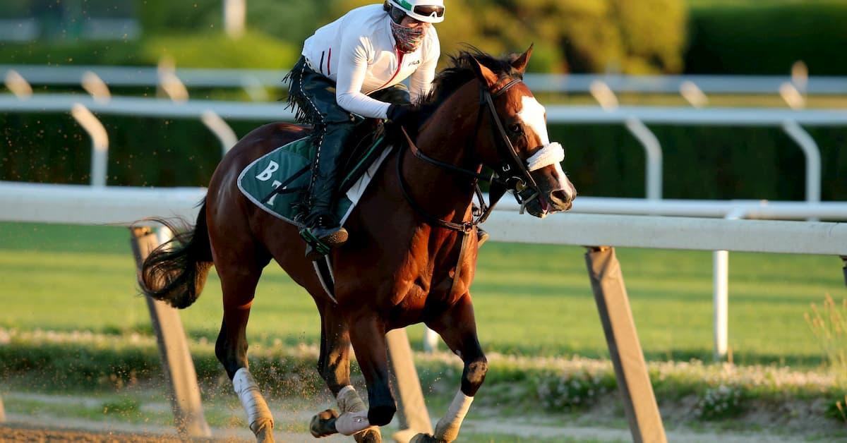 Horse racing betting odds belmont kentucky west virginia basketball betting line