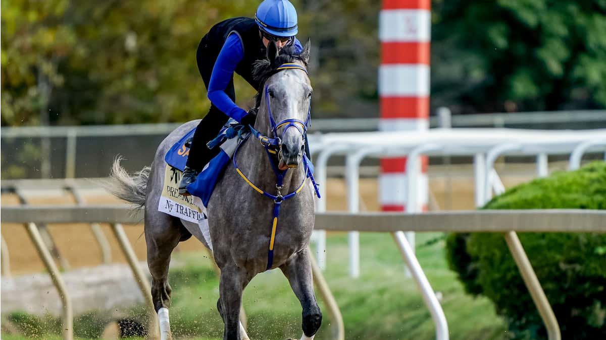 Salvator Mile (Monmouth Park) Predictions & Betting Odds