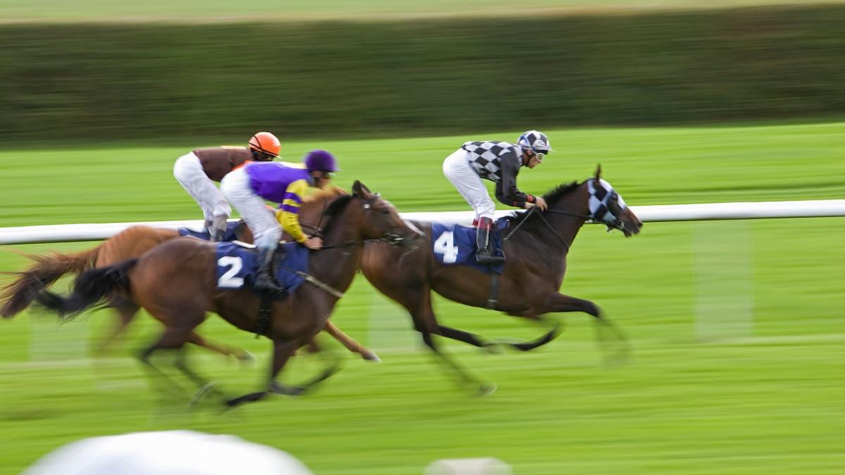 Best Horse Racing Picks