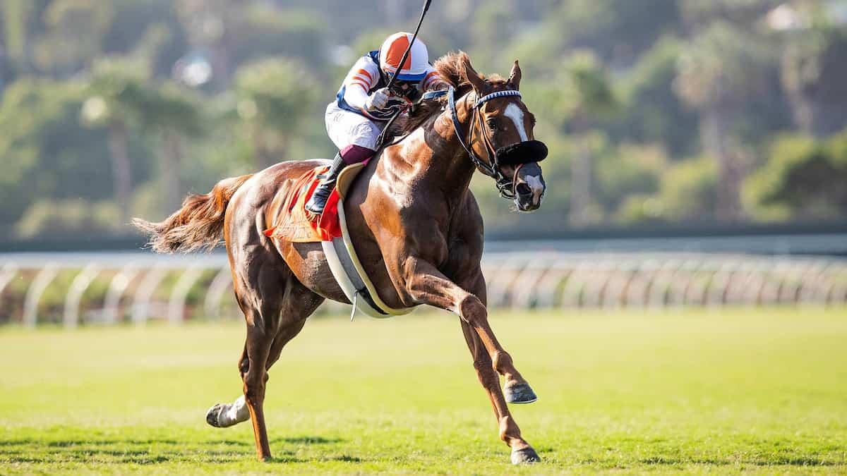Sorrento Stakes Predictions, Betting Odds, Picks (Del Mar)
