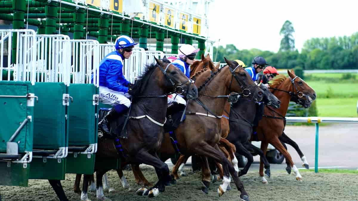 Best Horse Racing Picks This Weekend: Saratoga