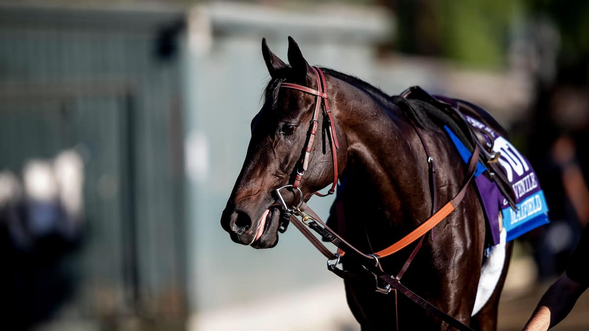 Woodward Stakes Predictions, Picks, Odds (Belmont Park)