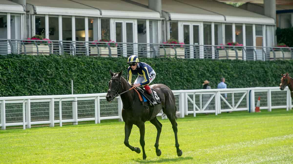 E.P. Taylor Stakes (Woodbine) Predictions, Top Picks, Odds