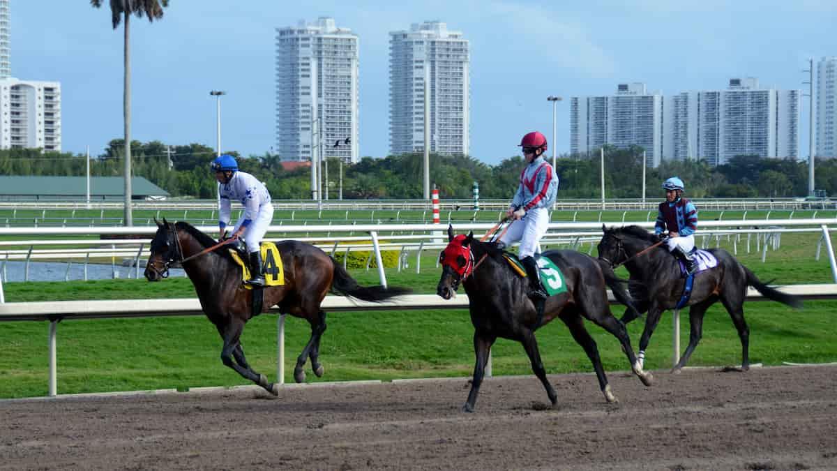 Best Horse Racing Picks This Weekend