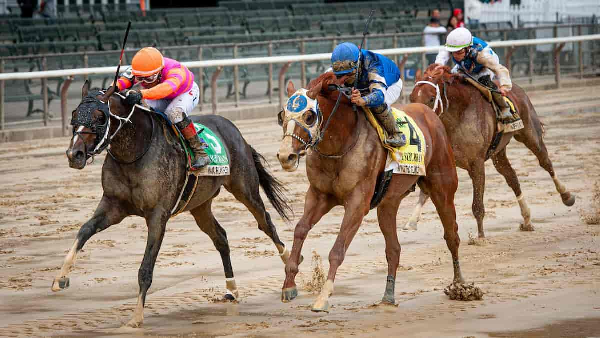 Noble Damsel Stakes Predictions, Top Picks, Odds